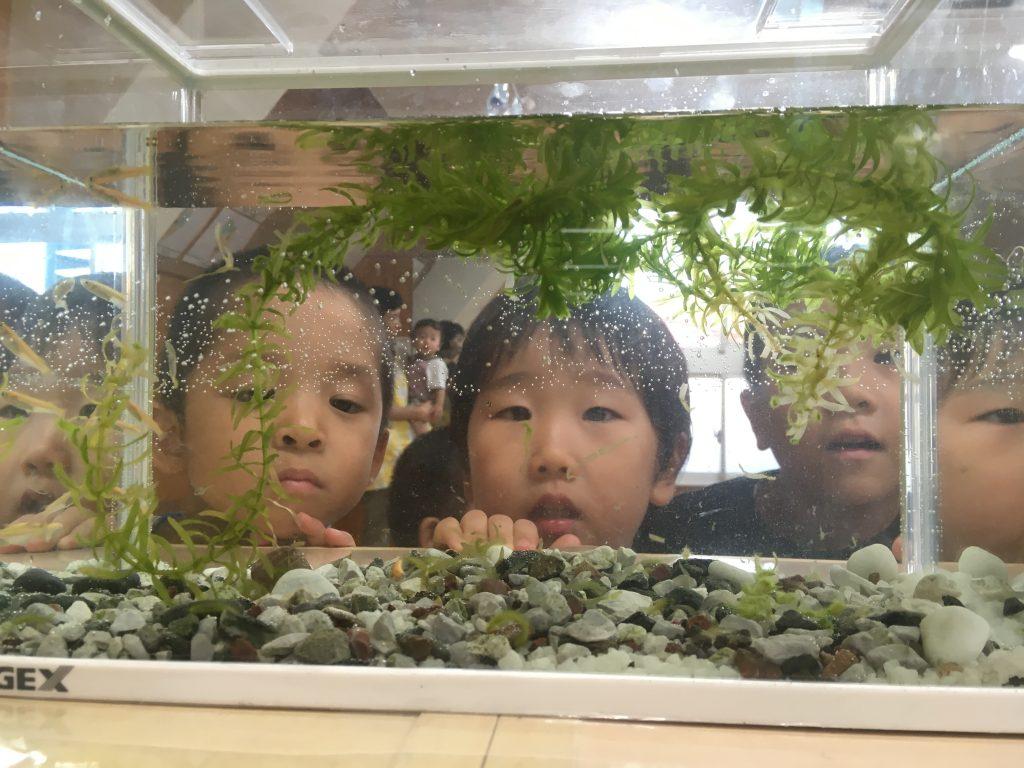 水槽を覗き込む園児の写真