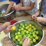 梅シロップと梅干作り