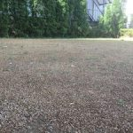 芝の芽がでてきました